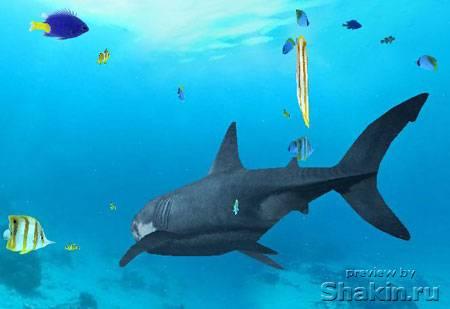 flash в океане с акулами