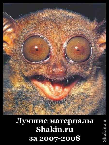 Лучшие материалы Shakin.ru за 2007-2008