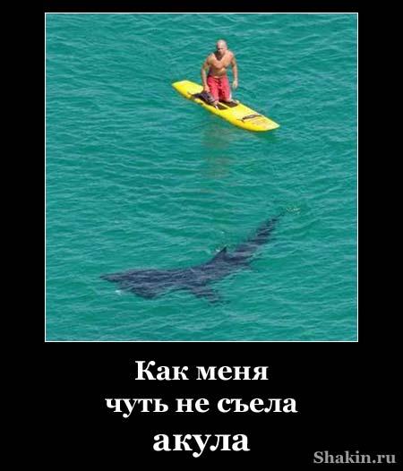 Как меня чуть не съела акула