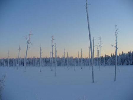 Зимой выжить в лесу