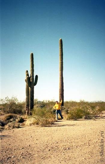Кактусы в Нью Мексико