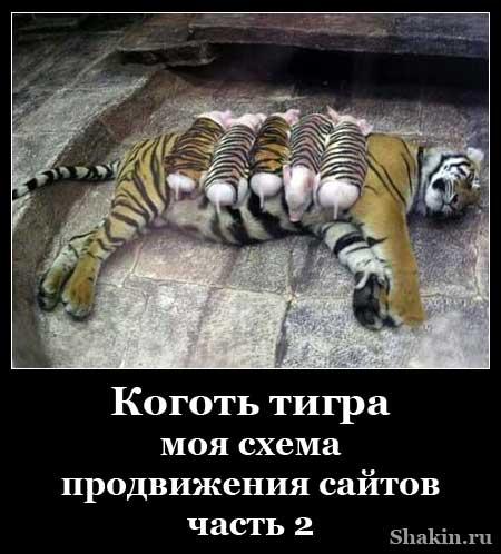 Коготь тигра - моя схема продвижения сайтов. Часть 2