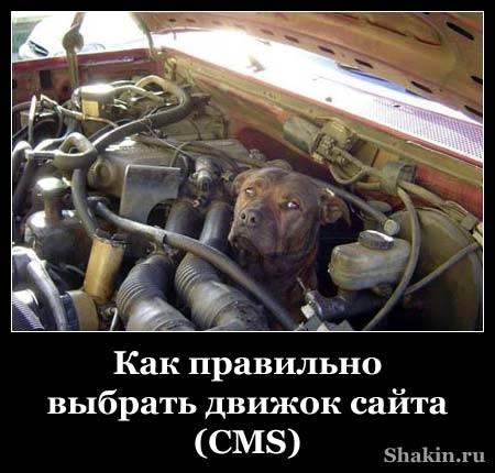 Как правильно выбрать движок сайта (CMS)